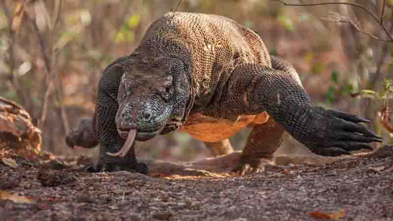 Komodo Trip From Bali | Flores Tours Package | Flores Komodo Tour